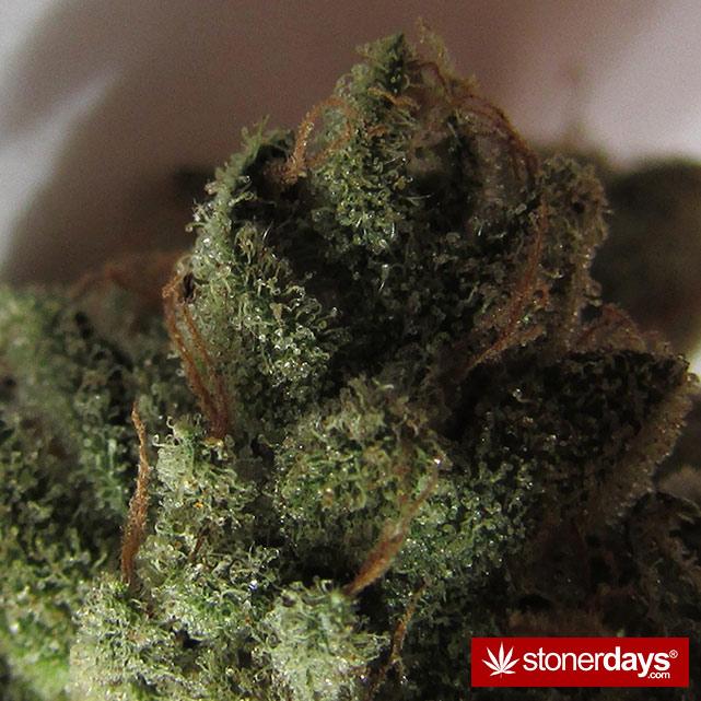 sexy-stoner-marijuana-pictures (551)