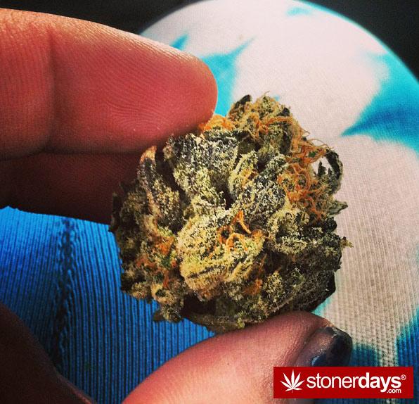 stoner-babes-stoned-macdizzle420-(20)