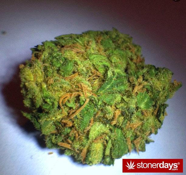 stoner-babes-stoned-vistoriaeuphoria7-(20)