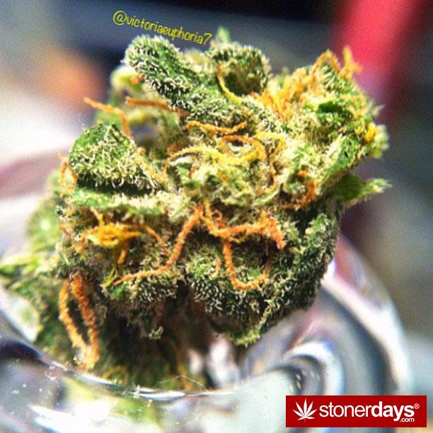 stoner-babes-stoned-vistoriaeuphoria7-(5)