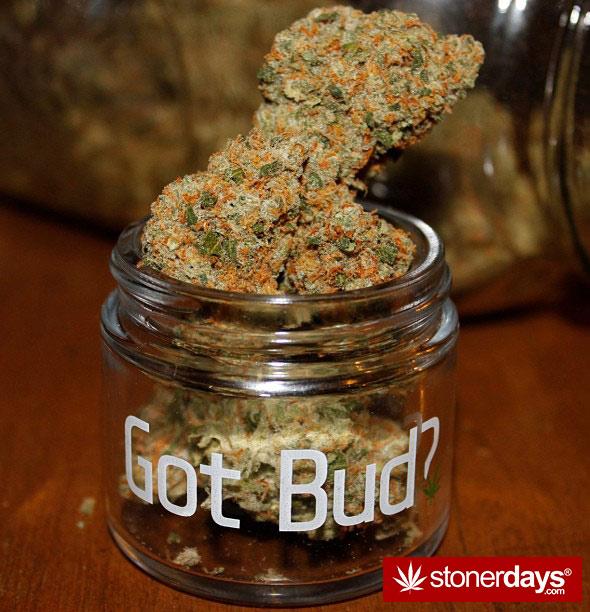 stoner-blazed-420-babe-blazed_beautyy--(8)
