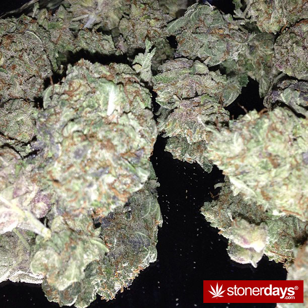 stoner-blazed-stoned-lindsehxo-(11)
