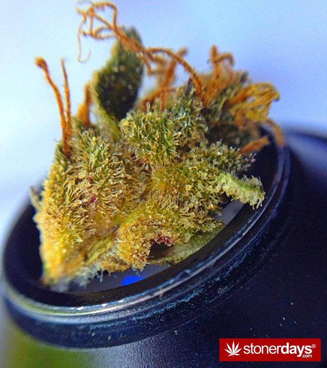 stoner-ganja-pothead-reefer (101)