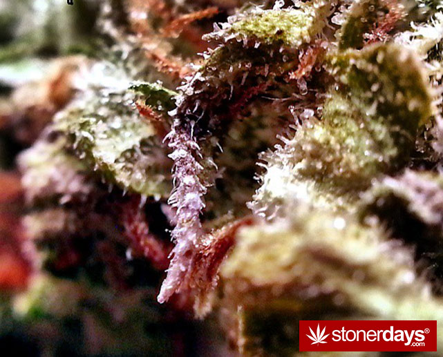 stoner-ganja-pothead-reefer (126)
