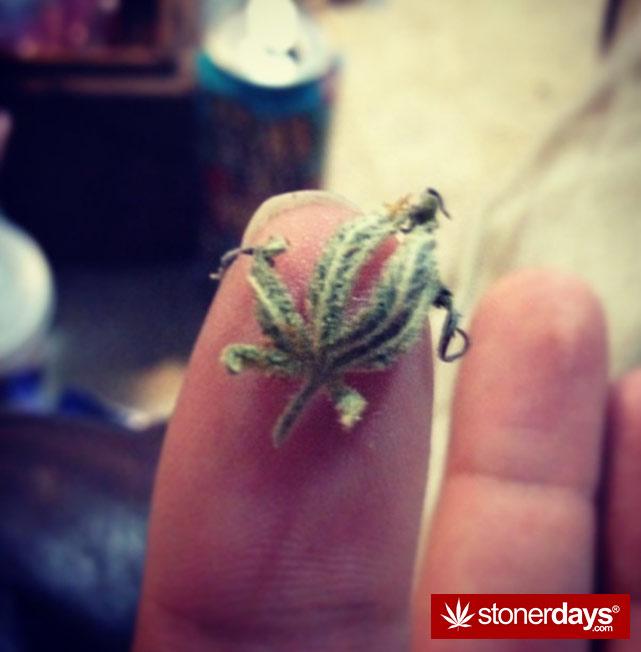 stoner-ganja-pothead-reefer (211)