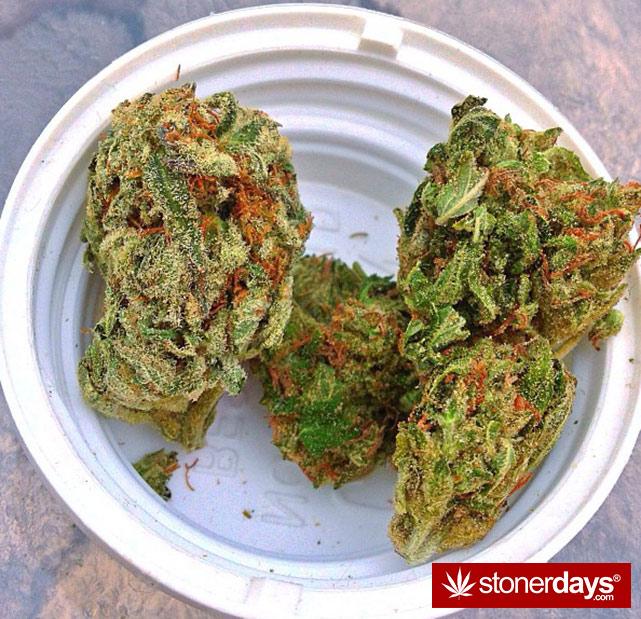 stoner-ganja-pothead-reefer (291)