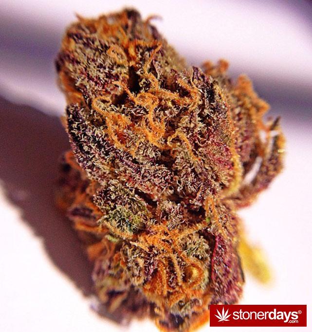 stoner-ganja-pothead-reefer (315)