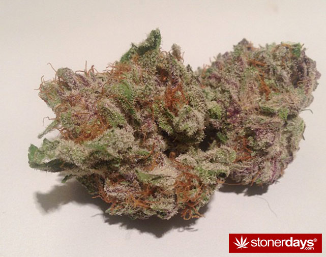 stoner-ganja-pothead-reefer (79)