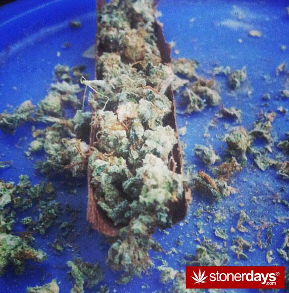 stoner-happy-420--stoned-jrbenzob--(84)