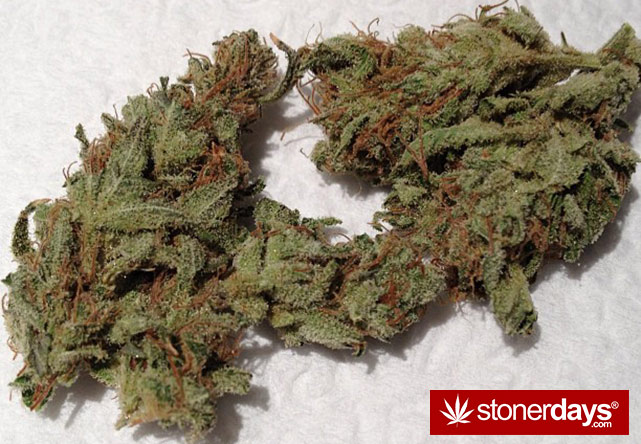 stoners-pics-of-pot-marijuana-pictures (146)