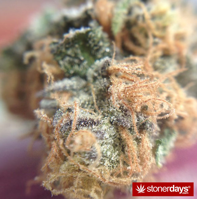 stoners-pics-of-pot-marijuana-pictures (231)