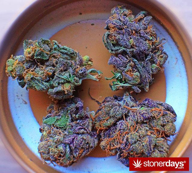 stoner-kush-marijuana-floridastoner-(17)