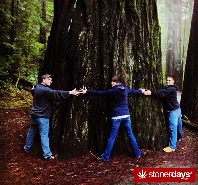 Top-10-Stoner-Cities-In-America-Humboldt-California-StonerDays