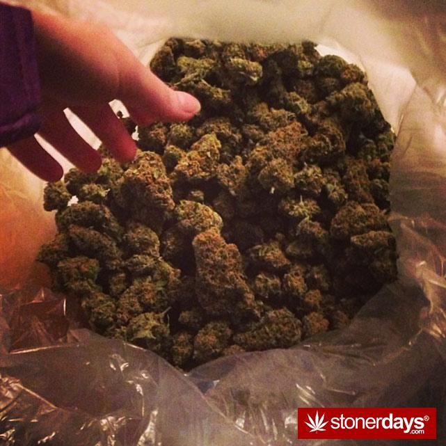 sexy-stoner-marijuana-pictures (182)