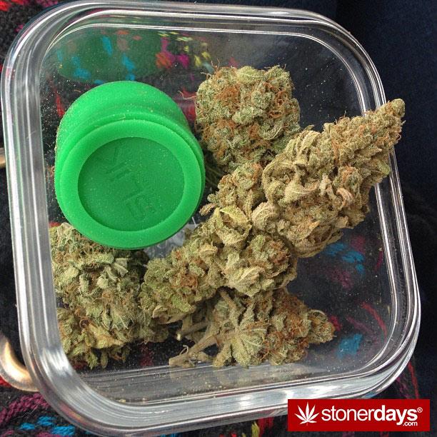 stoner-babes-marijuana-_dankyjesss-(25)
