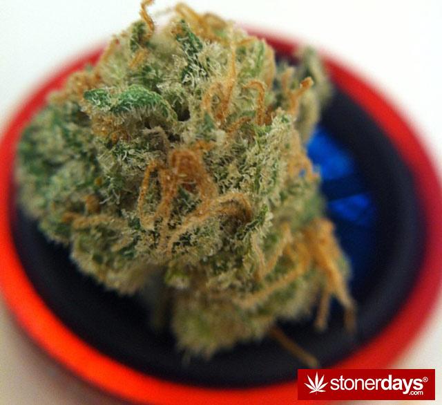 stoner-weed-kush-marijuana-comoxstone-(46)