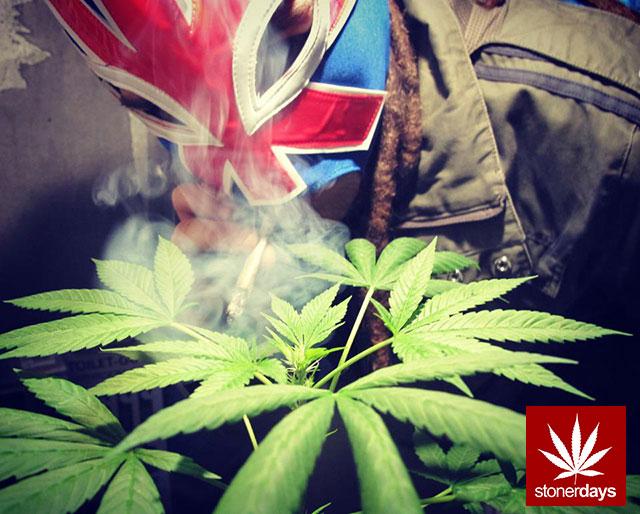 420-marijuana-stoner-(3)