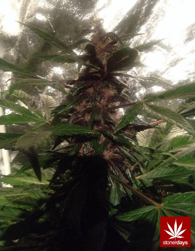 420-marijuana-stoner-(58)