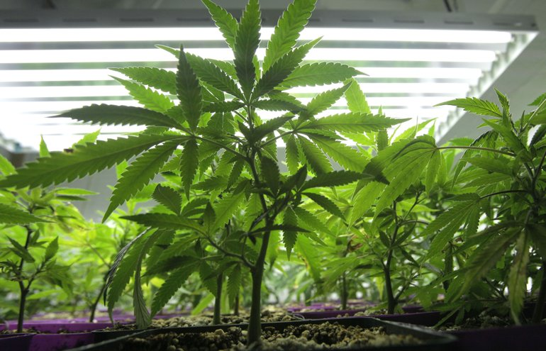 Legalizing_Marijuana_r770x495