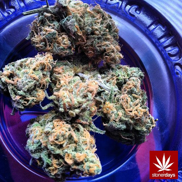 stoner-sexy-marijuana-PakaloloPrincess-(7)