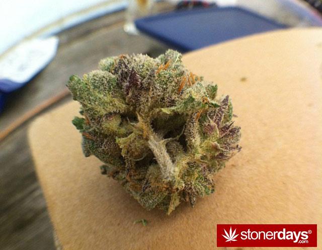 stoner-weed-kush-marijuana-comoxstone-(6)