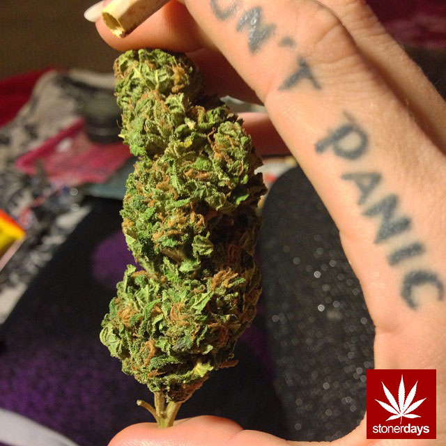 weed-stoner-shesmokesjoints