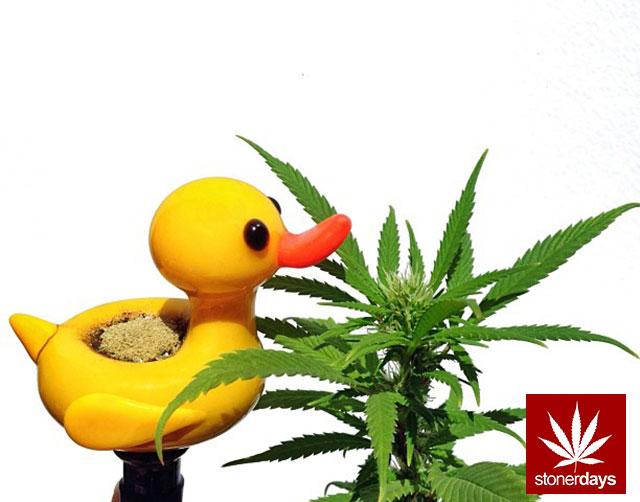 Marijuana-sexy-stoner-nefairyus-(8)