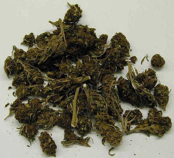 marijuana stoner dictionary stonerdays