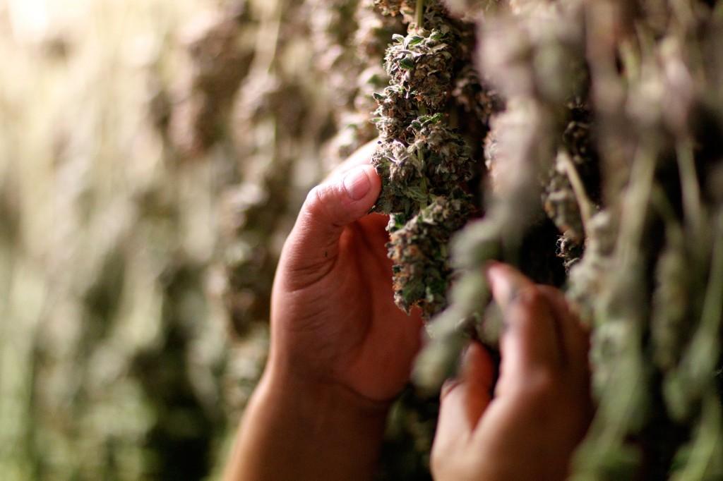 stoner stories stonerdays marijuana 2