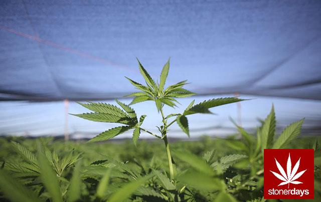 Stoner-Marijuana-StonerDays-Weed-(102)