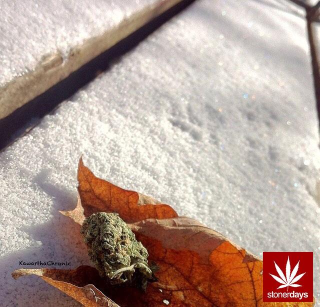 Stoner-Marijuana-StonerDays-Weed-(108)