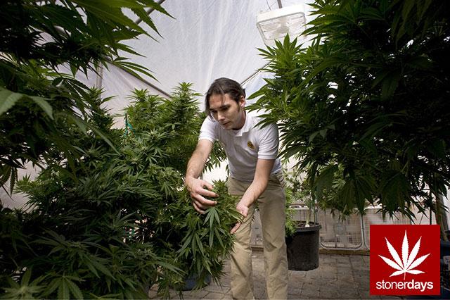 Stoner-Marijuana-StonerDays-Weed-(113)