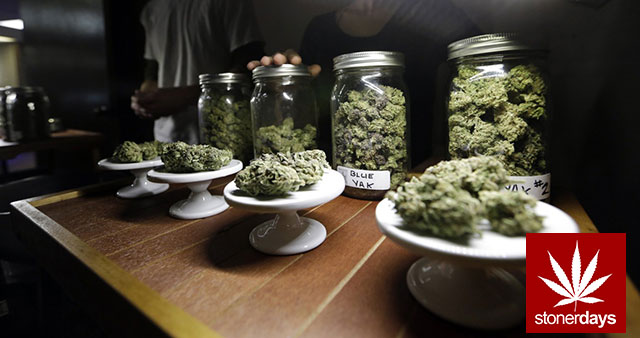 Stoner-Marijuana-StonerDays-Weed-(123)