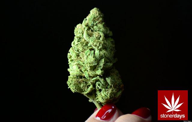 Stoner-Marijuana-StonerDays-Weed-(125)