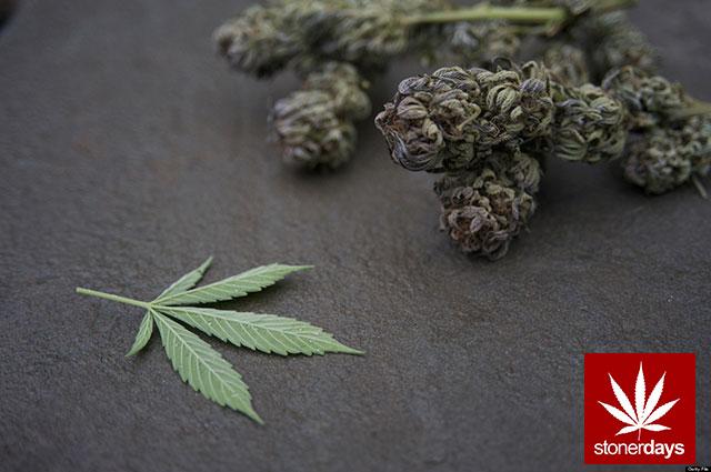 Stoner-Marijuana-StonerDays-Weed-(129)