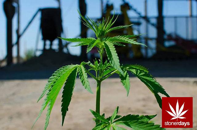 Stoner-Marijuana-StonerDays-Weed-(26)