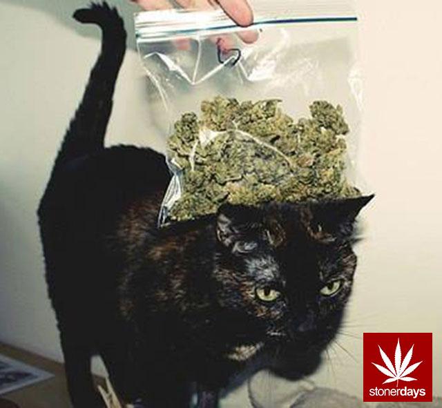 Stoner-Marijuana-StonerDays-Weed-(62)