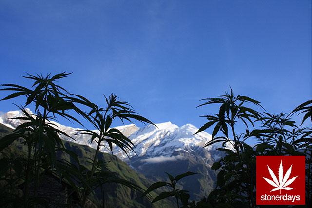 Stoner-Marijuana-StonerDays-Weed-(89)