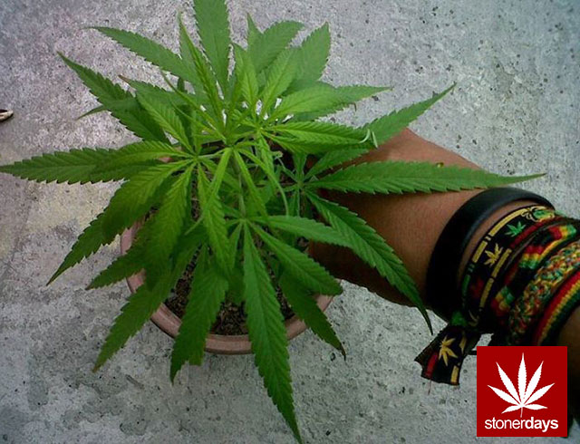 marijuana-stonerdays-420-sexy-pot-(70)