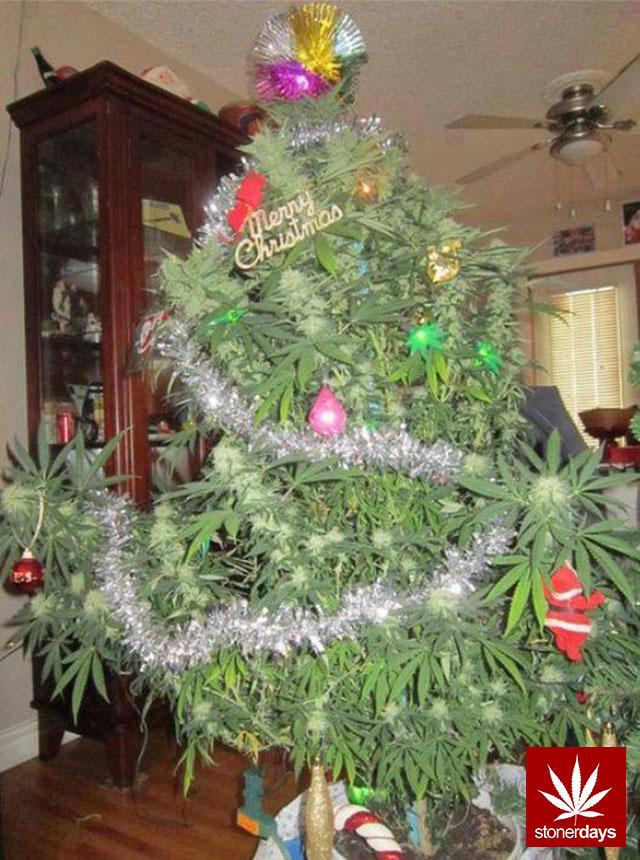 marijuana-stonerdays-420-sexy-pot-(71)