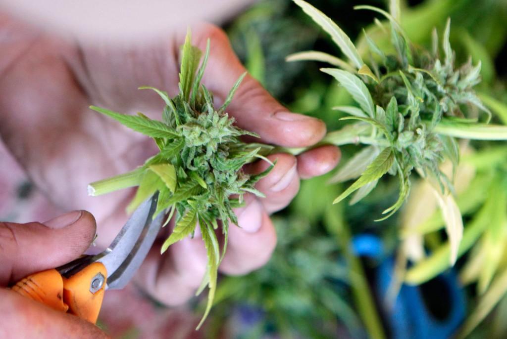 marijuana_ap_img_0