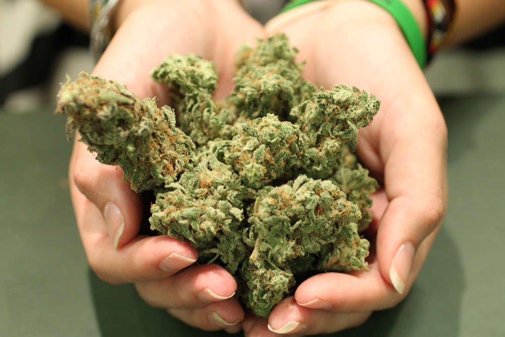Gupta_Kush_Helping_Hands_Herbals_12
