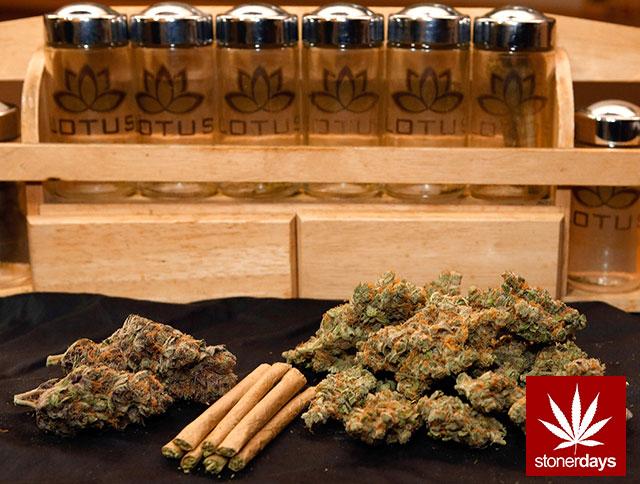 Stoner-Marijuana-StonerDays-Weed-(136)