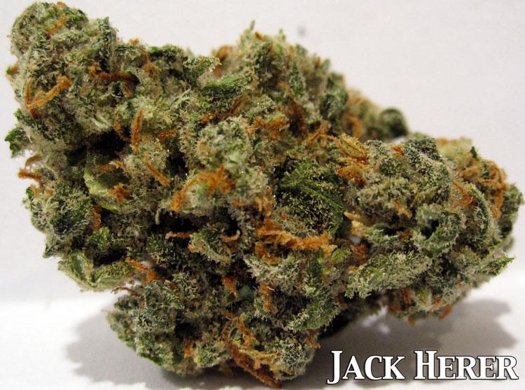 jack_herer