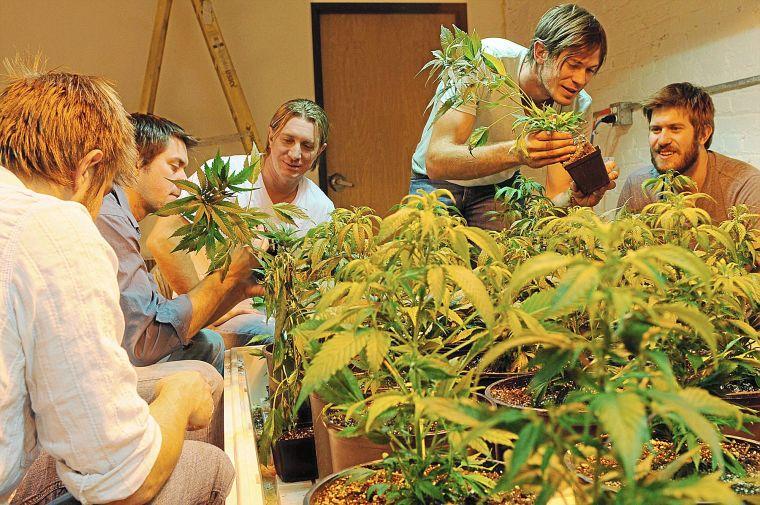 maijuana jobs (2)