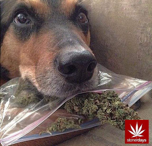 marijuana stonerdays stayblazed mls higher baked smoke tricks (132)