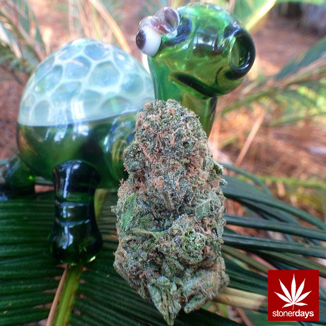 stonerdays-marijuana-baked-joints-blunts-sexy-(11)