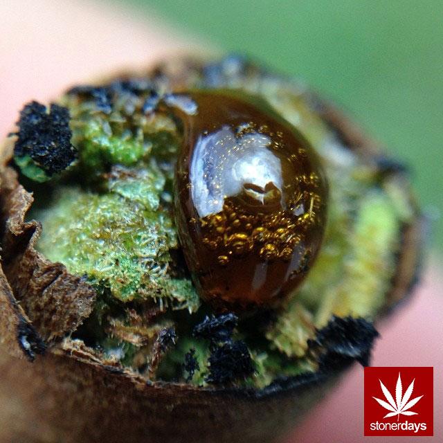 stonerdays-marijuana-baked-joints-blunts-sexy-(12)