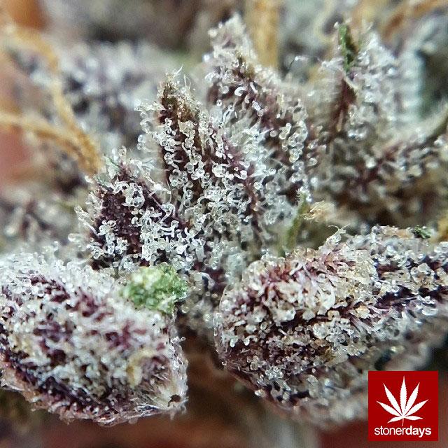 stonerdays-marijuana-baked-joints-blunts-sexy-(15)