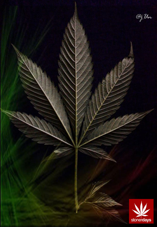 stonerdays-marijuana-baked-joints-blunts-sexy-(20)